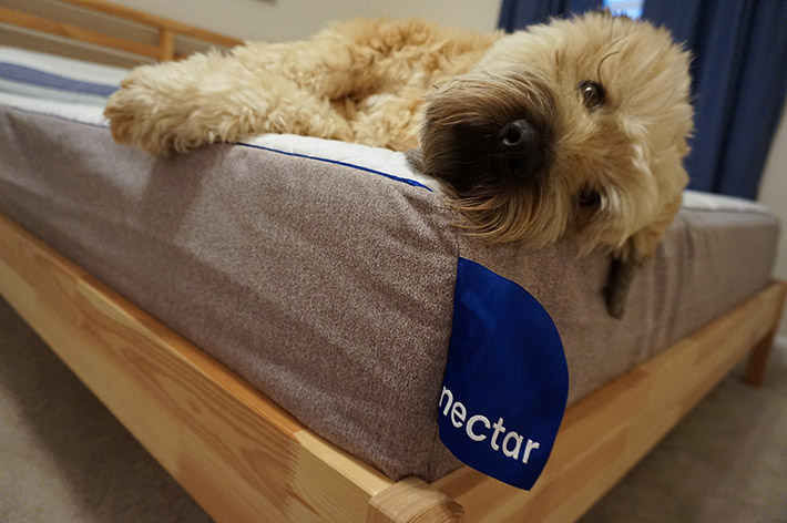 dog sleeping on the Nectar mattress